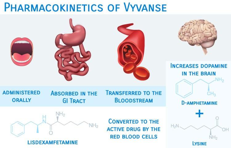 Vyvanse mechanism of action Lisdexamfetamine to dexamphetamine
